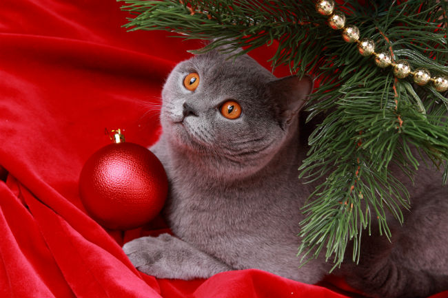 Cats and Christmas Trees – Can They Co-Exist?