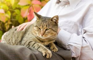 Senior Cats – Health Issues to Look for as they Get Older