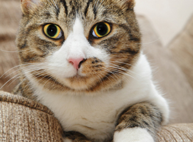 Common Cat Diseases That Can Affect Your Furry Friend