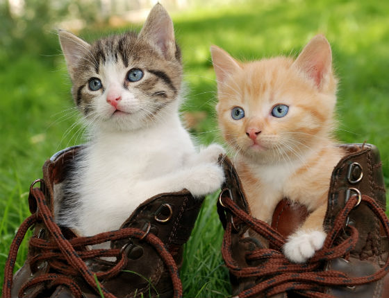 Cat Healthcare: Conditions Often Found in Kittens